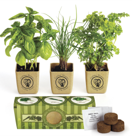 GrowPot Eco Planter for Herb Garden Set